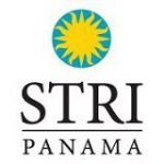 contentimage-15539-289142-stripanama